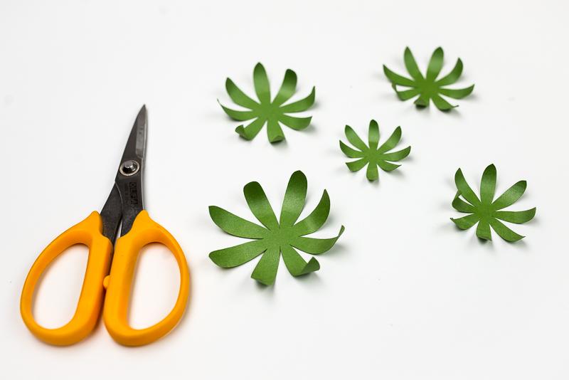 Assembling the Spiky Succulent