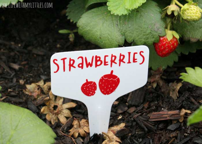 DIY garden plant and fruit markers using Cricut Joy
