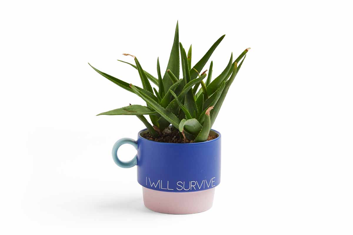 Convert a mug to a planter with vinyl and your Cricut!