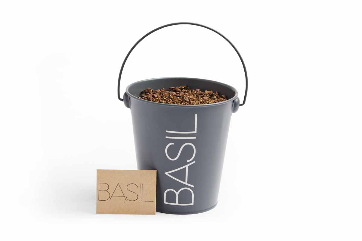 Basil herb planter made out of a bucket.