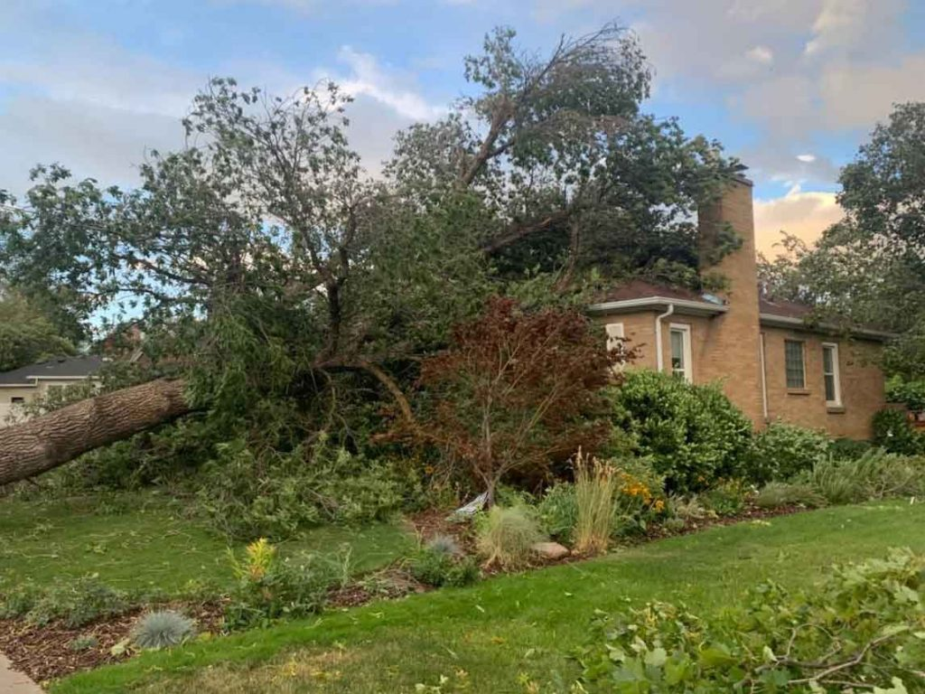 Tree fallen onto a house