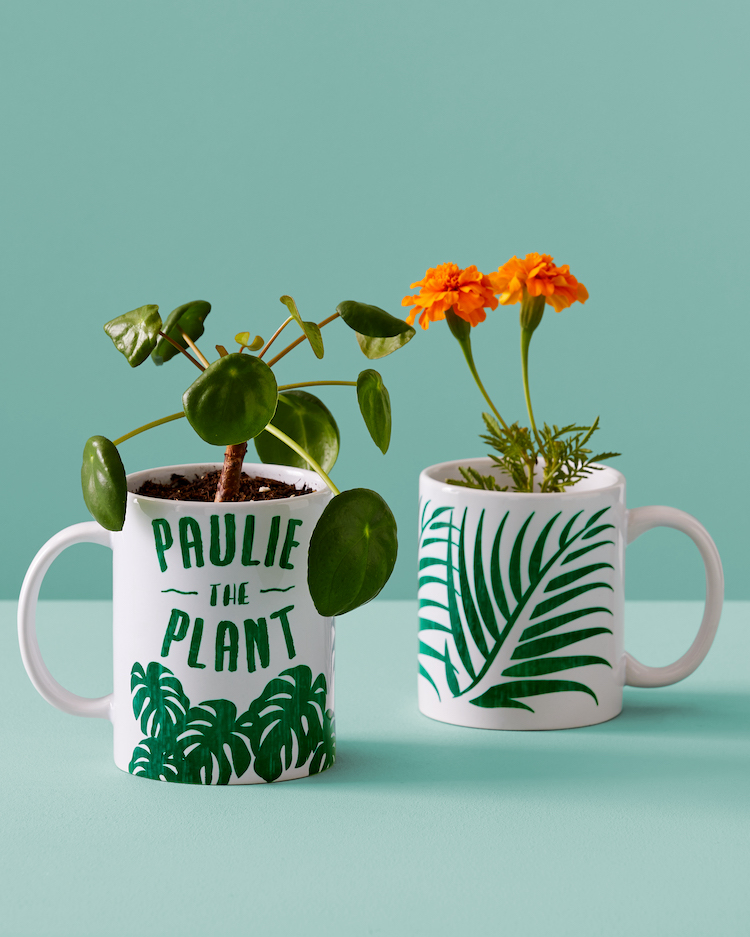 Two plants in plant-themed mugs