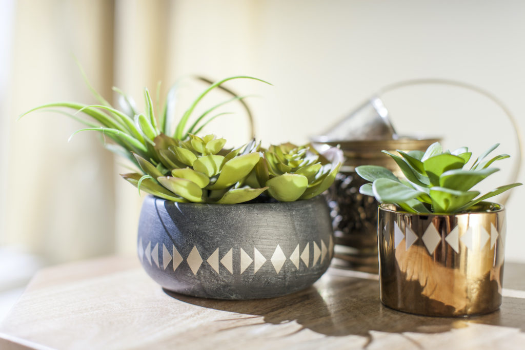 Two potted succulents, side by side planted in embellished bowls.