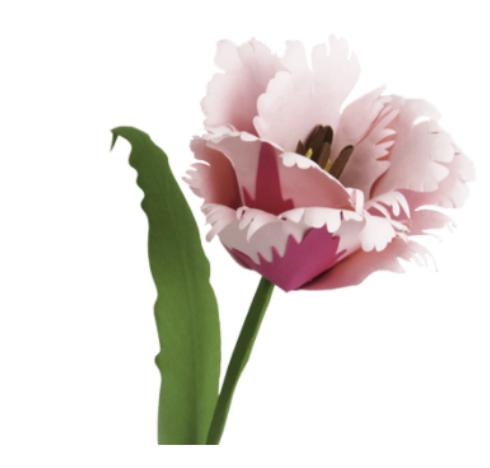 parrot tulip paper flower