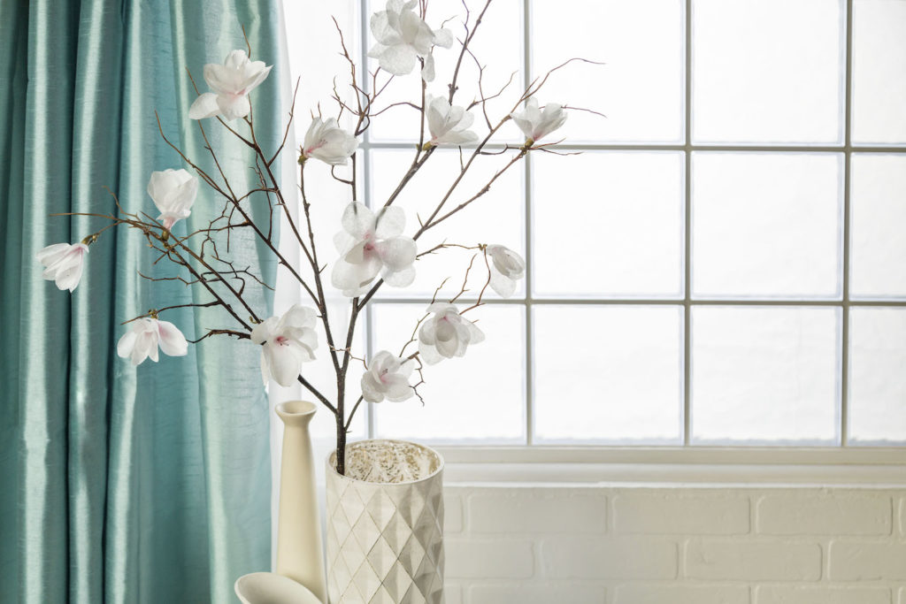 Orchid in front of window