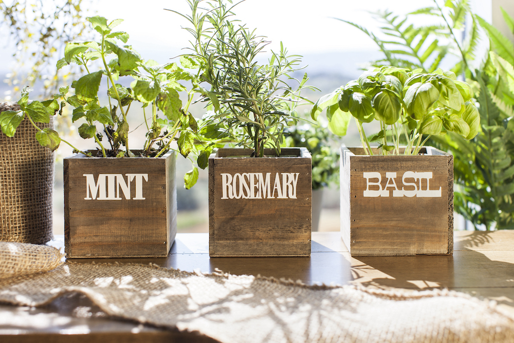 Labeled wooden box planters containing herbs